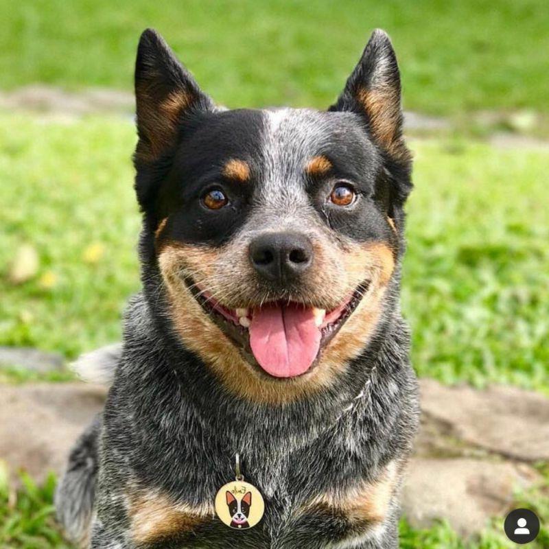 placas de plata para perros