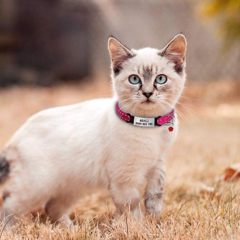 placas de plata para gatos
